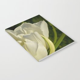 Double White Tulip by Teresa Thompson Notebook