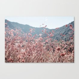 California Pink Flowers Canvas Print