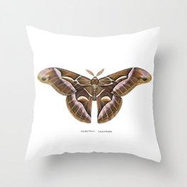 Ailanthus Silkmoth (Samia cynthia) Throw Pillow