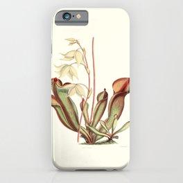 Heliamphora nutans iPhone Case