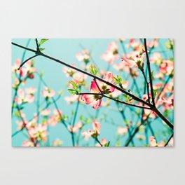 Aqua Spring Canvas Print