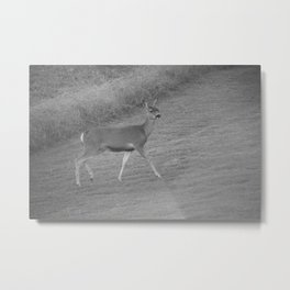 Southern California Deer Walking In The Grass In Black And White Metal Print