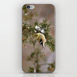 Professor Goldfinch iPhone Skin