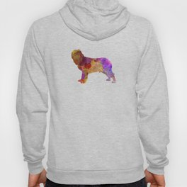 Napolitan Mastiff in watercolor Hoody