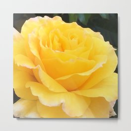 My Yellow Rose Metal Print
