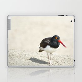 Common Oystercatcher (Haematopus palliatus) Laptop & iPad Skin