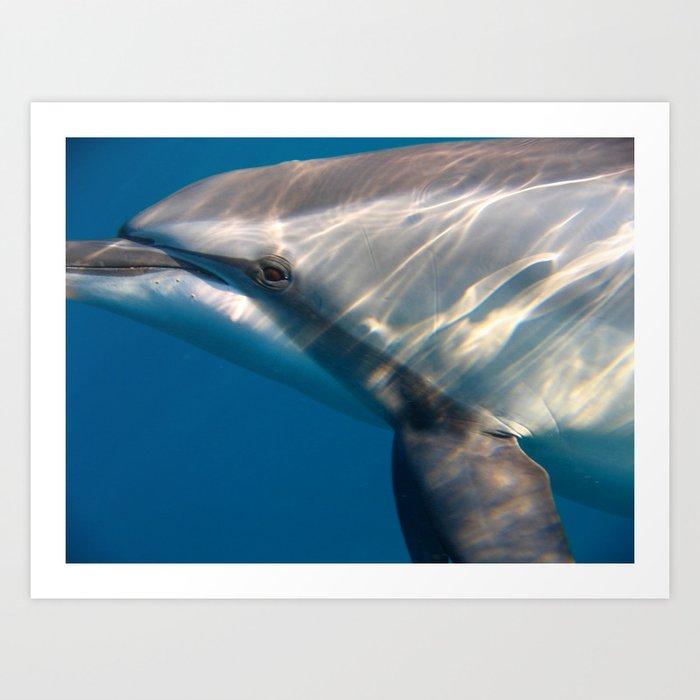 Dolphin's Gaze Art Print