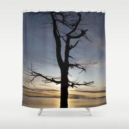 Shadow tree at dawn - Khövsgöl Mongolia Shower Curtain