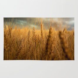 Harvest Time - Golden Wheat in Colorado Field Rug