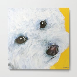 Blair the Bichon Frise Metal Print