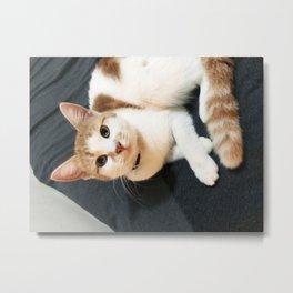 august mini meowie cat Metal Print
