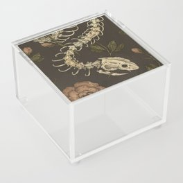 Snake Skeleton Acrylic Box