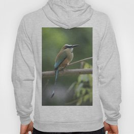 Turquoise-browed motmot perched in Costa Rican rainforest tree. Hoody
