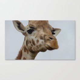 Giraffe Looking Down Canvas Print