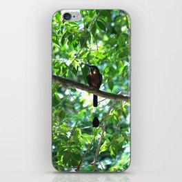 Cenote Squabbler iPhone Skin