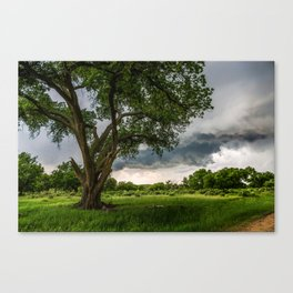 Big Tree - Tall Cottonwood and Passing Storm in Texas Canvas Print