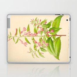 Lobelia Ghiesbreghtii Vintage Botanical Floral Flower Plant Scientific Illustration Laptop & iPad Skin