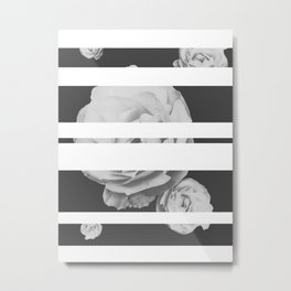 White Stipe Roses Metal Print