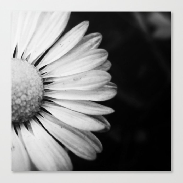 Black and white flower macro photography monochromatic photo canvas black and white flower macro photography monochromatic photo canvas print mightylinksfo
