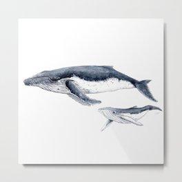 Humpback whale with calf Metal Print
