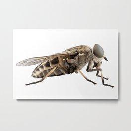 Large marsh horsefly species Tabanus autumnalis Metal Print