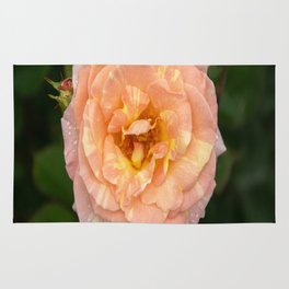 Flirtation Rose Rug