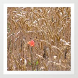 Poppy in a wheatfield Art Print
