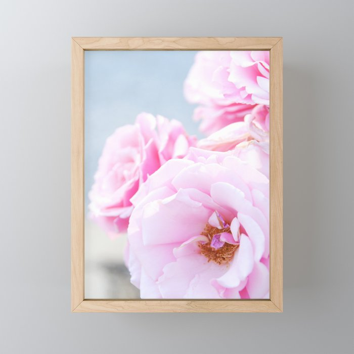 Blushing Roses Framed Mini Art Print