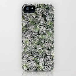 Fittonia albivenis iPhone Case