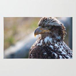 Young Bald Eagle Rug