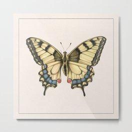 Butterfly II Metal Print