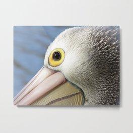 Australian Pelican #1 Metal Print