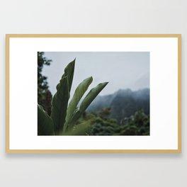 Rainforest Raindrops Framed Art Print