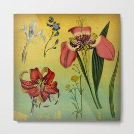 Lily & Iris Metal Print