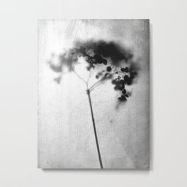 Hydrangea Black and White Vintage Look Botanical Photo Metal Print
